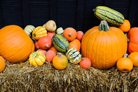cinderella pumpkin: A variety of squash displayed outside during the autumn season.
