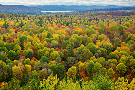 A top view of colourful forest trees and lake in the autumn season.