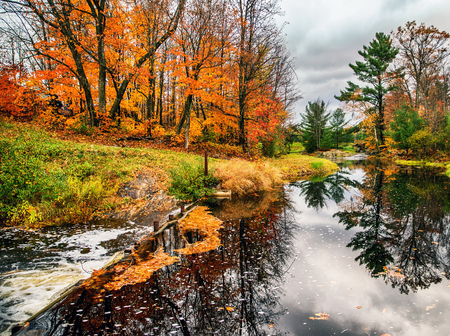treed: A stream runs through treed landscape in the fall season.