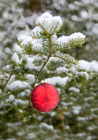 a red christmas bulb decorations hanging off a spruce tree outside room for copy space