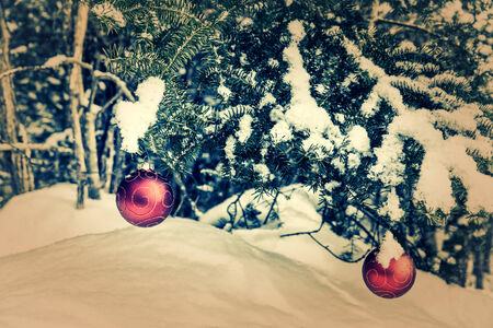 Two red Christmas bauble decorations hanging off a spruce tree outside partially covered in snow.  Room for copy space.  Retro, faded, vintage Imagens