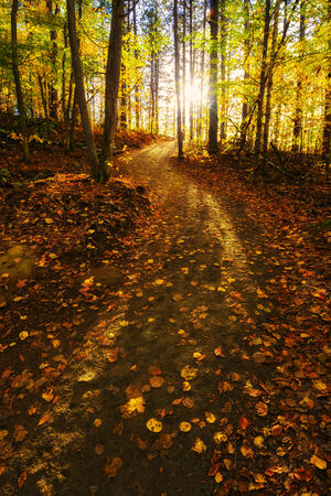 The sunlight shines through the trees beyond a path which lies in an forest during the fall season.