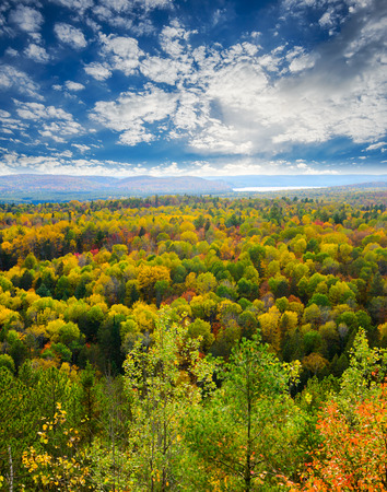 A high view of tree tops in a forest during the autumn season with a lake in the distance. photo