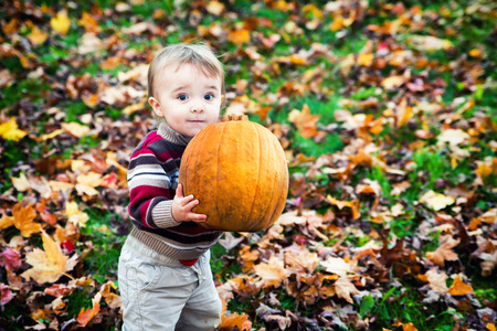 wide eyed: A wide eyed toddler holding a big pumpkin outside in the Fall.
