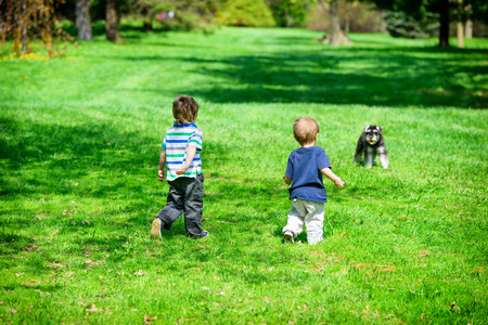 approaching: Two young boys approaching a dog in a park.