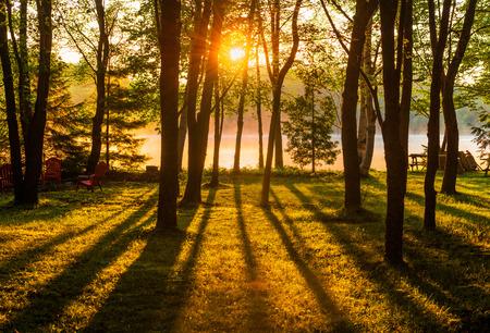 Een zonsopgang schijnt over een mistige meer door bomen in een parkachtige setting.