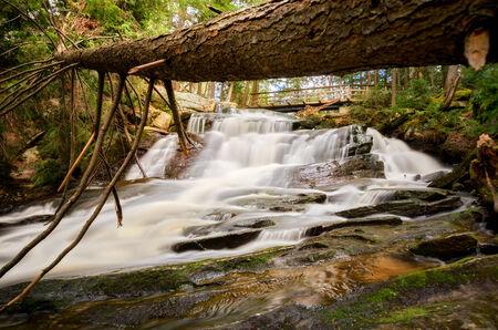 A fallen tree hangs over a waterfall. photo