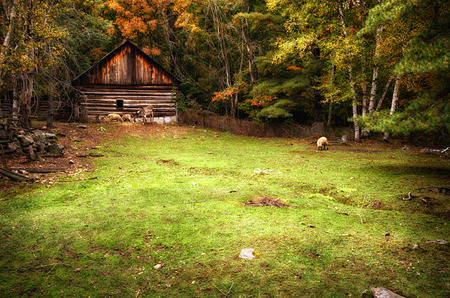 A historic log house on the edge of a forest with a fenced field.  A donkey and three sheep in the field feed on the grass during the autumn season. photo