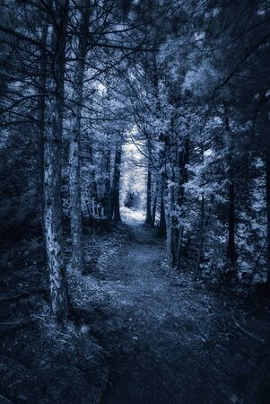 forest path: Photographed with a 665nm near infrared converted camera, of a dark surreal forest path.