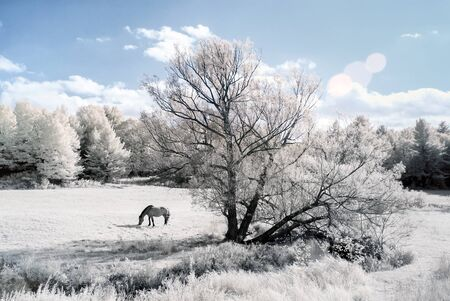 An infrared photo of a horse in a field with a stream on the edge of a forest. photo
