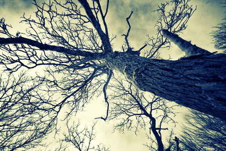 A low angle shot of a gnarled tree during the winter.  Faded, retro, vintage, instagram. Imagens