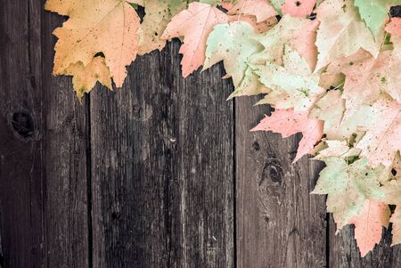 faded: An infrared image of autumn maple leaves arranged on old wooden boards to make a corner boarder.  Room for copyspace.