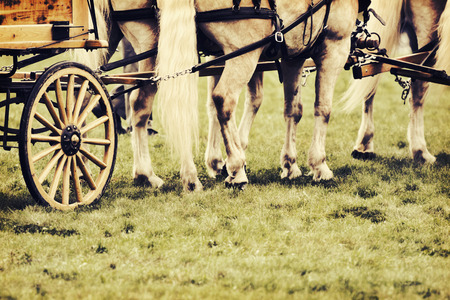 horse show: A close up of horses hooves and legs.  The horses are in a harness attached to a wagon on a grass field during a fair horse show.  Filtered to give retro, vintage look.