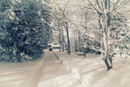 Photographed with a 590nm near infrared converted camera, of a long snow cleared driveway leading to a house in a forest covered in snow after a snow storm in the winter. Toned. 스톡 콘텐츠