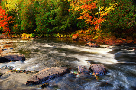 rushing: A rushing river with some green and colorful trees during the fall. Stock Photo