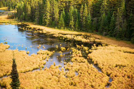 provincial forest parks: An overhead shot of a beaver pond at a natural park.