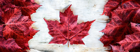 A Canada flag made from real red maple leafs on a birch bark background.