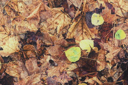 decomposing: A close up of decomposing fall leaves on the ground of a rural forest.  Filtered to give vintage, faded look. Stock Photo