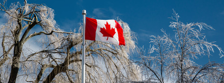 canadian flag: A Canadian Flag flying on a clear sunny day with ice covered trees in the background after an ice storm.