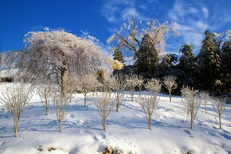 ice storm: Ice covered trees on a sunny day in a park landscape after an ice storm. Stock Photo