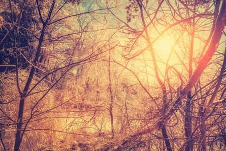 ice storm: The sun shines brightly orange illuminating the ice covered branches of a tree making them sparkle and glow after an ice storm during the winter season.   Stock Photo
