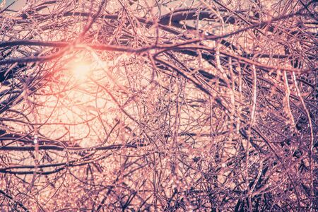 ice storm: The sun shines brightly illuminating the ice covered branches of a tree making them sparkle after an ice storm during the winter season.