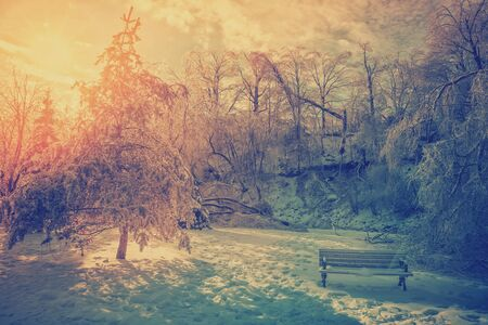 ice storm: The sun shines brightly behind ice covered trees damaged from an ice storm and an icy bench in a park during the winter season.