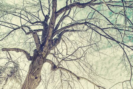 face in tree bark: A background image of a mans face in the bark of an ice covered tree after an ice storm during the winter season.