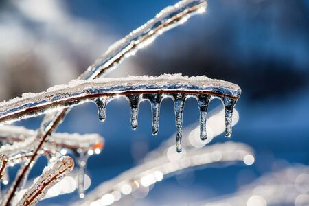 A close up macro of sparkling icicles on a twig taken with a shallow depth of field during the winter season.