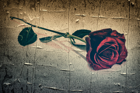 faded: A single rose lying on a surface.  Overlayed with a grunge texture.