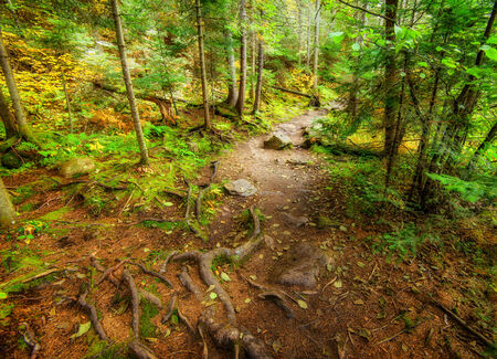 rooted: A high angle shot of a descending path in a forest during the autumn season. Stock Photo