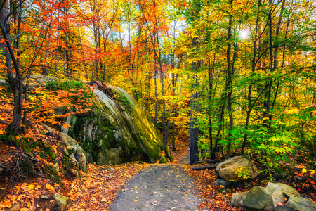 A path through a rocky forested landscape during the day in the autumn season.