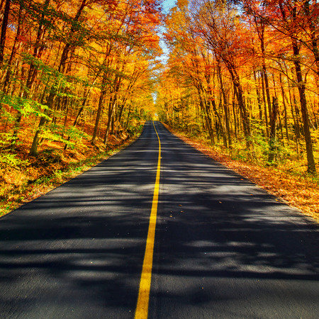 drives: A long two lane rural road running through a colorful vibrant treed corridor landscape during the autumn season.