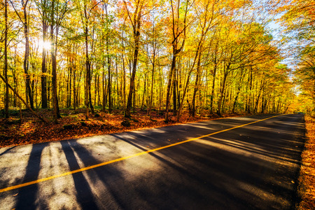 either: A shot by a rural road with colorful treed landscape on either side during the autumn season.
