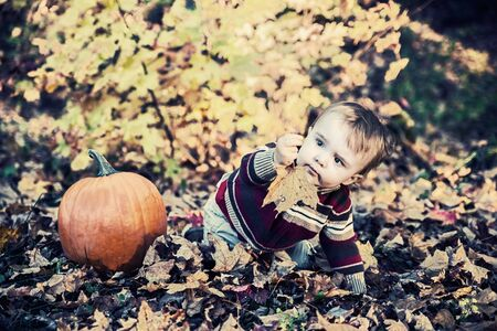 A boy sits beside a pumpkin outside on the leaf covered ground in a forested landscape holding out a maple leaf during the autumn season.  Filtered to give vintage, faded look. photo