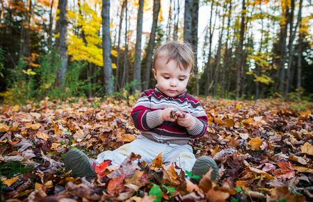 sitting on the ground: A boy sits on a leaf covered ground in a forested landscape inspecting a brown maple leaf in his hands during the autumn season. Stock Photo