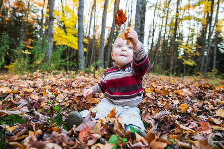 A boy sits on a leaf covered ground in a forested landscape holding up maple leaves in his hand while looking at them during the autumn season. photo