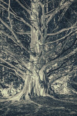 gnarled: A color inverted image of a gnarled cedar tree truck with many branches growing outward.