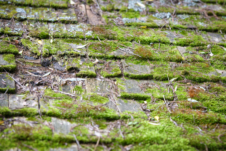 Close up of old worn cedar roof shingles covered in lush green moss growth.