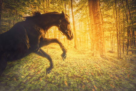 A photo of a horse rearing on its hind legs in a magical forest.  The sun light shines a bright fiery yellow, orange through the trees behind the horse. Stok Fotoğraf