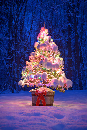 A snow covered natural spruce Christmas tree with illuminated colorful lights sits in an old aged wine barrel pot outside in a snowy forest during the winter season at night time. 版權商用圖片