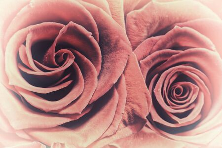 vignette: A close up of two red roses.  A vignette is applied to the image.