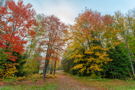 A gravel driveway running through colorful trees toward a rural roadway during a misty morning in the autumn season.  Shot with a wide angle lens. Stock Photo
