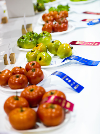 entries: Tomatoes sit on a table with their ribbons on display during a competition at an agricultural fall fair.