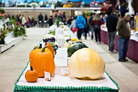judged: Pumpkins and various vegetables sit on a table in competition awaiting to be judged at an agricultural fall fair.  Taken with a shallow depth of field so the pumpkins at the end of the table are in focus.