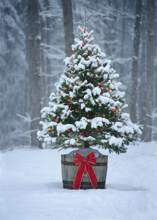A snow covered natural spruce Christmas tree with illuminated colorful lights sits in an old aged wine barrel pot outside in a snowy forest during the winter season. Stockfoto