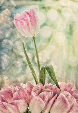room for copy: A pink and white tulip grows above a group of tulips below against a bokeh background.  Filtered for a retro, faded look.  Room for copy space.