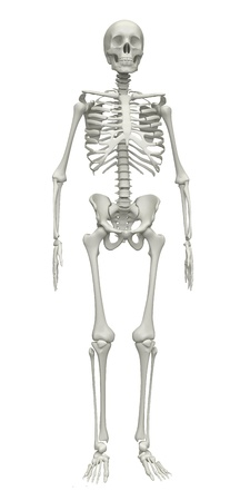 one people: Skeleton on a white background. 3d rendered illustration Stock Photo