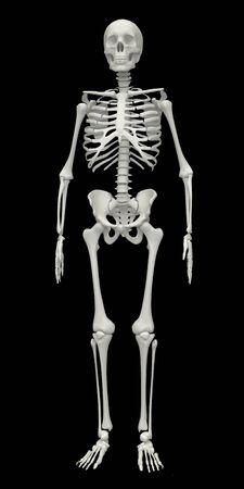 full body: Skeleton on a black background. 3d rendered illustration Stock Photo