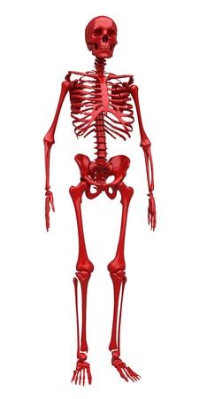 full body: Red skeleton. Isolated. 3d rendered illustration Stock Photo